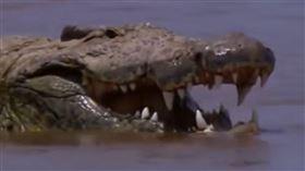非洲,尼羅鱷,蒲隆地,古斯塔夫,Gustave。(圖/翻攝自AG youtube)