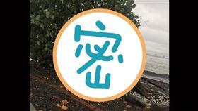 韓國瑜,樹,國瑜樹,市境之南,倒塌