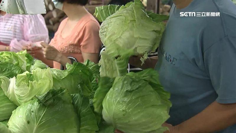 農民心淌血!高麗菜「水傷剝皮」變小 單顆較上週漲約3成