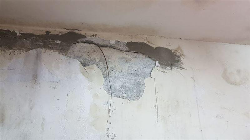 牆壁中「長出尾巴」她嚇壞 過來人驚勸快處理:房子不保了