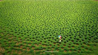 宛如幾米畫作 嘉義抹茶洞草原超療癒