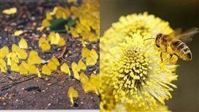 花蜜,蝴蝶,蜜蜂,採蜜,打架,PTT