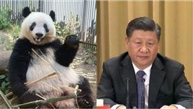 熊貓、習近平(組合圖/資料照)