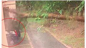 南投暴雨狂炸大樹倒塌 砸爛記者座車(圖/翻攝畫面)