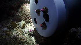 充裕海洋漁業資源 澎湖海域多物種放流