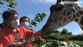 0531 陳時中到頑皮世界,餵食長頸鹿。(圖/記者花芸曦攝影)