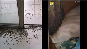 中國大四生,半年重返宿舍噁變「蜜蜂墳場」 一查衣櫃…竟藏超巨大蜂巢。(圖/翻攝自微博)