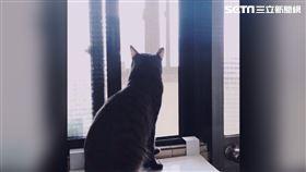 ▲貓,家貓,貓咪,流浪貓,寵物。(圖/記者楊佩琪攝)