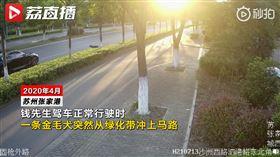 大陸,江蘇,公園,狗,車禍,BMW(圖/翻攝自微博)