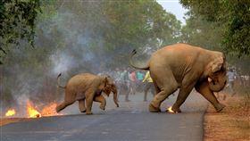 印度,大象,動物,棲息,覓食,人象衝突,燃燒彈,炸彈菠蘿