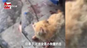 大陸,廣東,虐狗,機車,違法(圖/翻攝自YouTube)