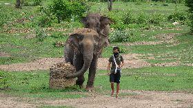 照顧員帶大象散步