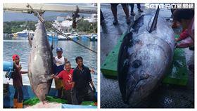 台東漁船順昇號今(9)日捕獲1尾重達395公斤、體長近3公尺的「巨無霸黑鮪魚」!