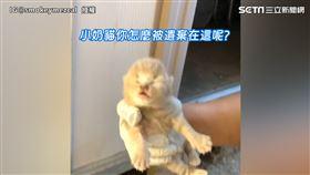聽聞遺棄奶貓叫聲秒心軟 老外化身貓奴展超暖行徑