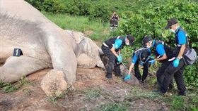 這次不是鳳梨炸彈 大象吃芒果觸電亡 泰國,大象,芒果,電網,鳳梨炸彈 翻攝自網路
