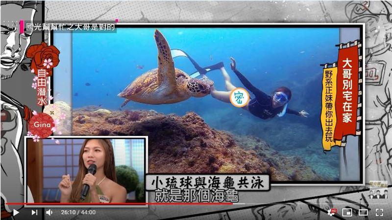 正妹潛水穿「小丁」 海龜竟一路緊跟