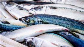 魚(圖/翻攝自pixabay)