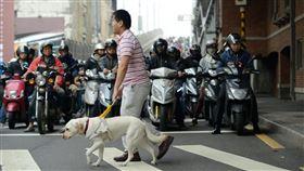 導盲犬(翻攝惠光導盲犬學校臉書)