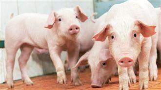 台灣豬肉出口澳門 每週銷200頭