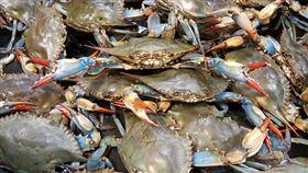 螃蟹(圖/翻攝自pixbay)