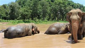 大象(圖/翻攝自pixabay)