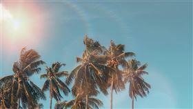 夏天,陽光,棕櫚樹。(圖/翻攝自Pexels)