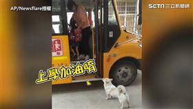 ▲小狗狗送女孩上學。(圖/AP/Newsflare授權)