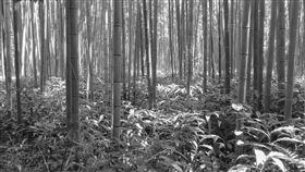 深山、竹林。(圖/翻攝自Pixabay)