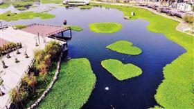星泉湖有會呼吸的湖泊之美稱,湖面雙心水草,掀起搶拍風潮。(圖/台中市政府新聞局提供)