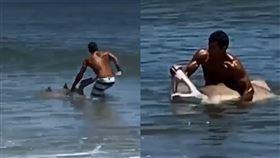 男徒手抓鯊「掰開鯊口」拍照…網罵爆 美國,鯊魚,沙虎鯊,德拉瓦州,保育 翻攝自《FOX 5 DC》