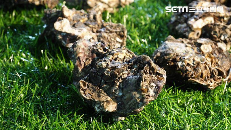 殺菌還能洗出農藥!天然環保「蚵殼粉」爆紅 成主婦界新寵