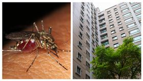 蚊子(Pixabay)