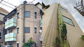 仙人掌,巨大,逃跑,不科學,東京,民宅