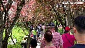 太平山回堵2公里!將達3000人管制上限 園方:別再來(圖/新聞台)