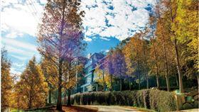 ▲每一層樓看出去的樹景,因高低落差而不同,各有疊巒層次的療癒之美。(圖/松之戀提供)