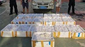貨車傳怪味!警攔車驚見「11595顆蛇蛋」…全是眼鏡蛇(圖/翻攝自微博)