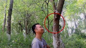 蛇,中國,黑夜騎士,樹林(圖/翻攝自youtube戶外騎士)
