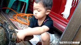 台中3歲童被象龜縮龜頭嚇到/陳先生授權提供