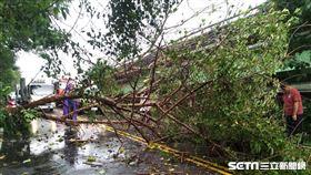 台中路樹倒塌壓死女騎士/翻攝畫面