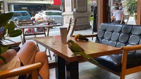 寵物友善餐廳,飼主,咖啡廳,衛生,鸚鵡,桌上,放任