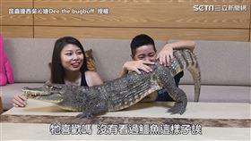 ▲鱷魚妹妹像隻小貓咪似的撒嬌。(圖/昆蟲擾西吳沁婕Dee the bugbuff 授權)