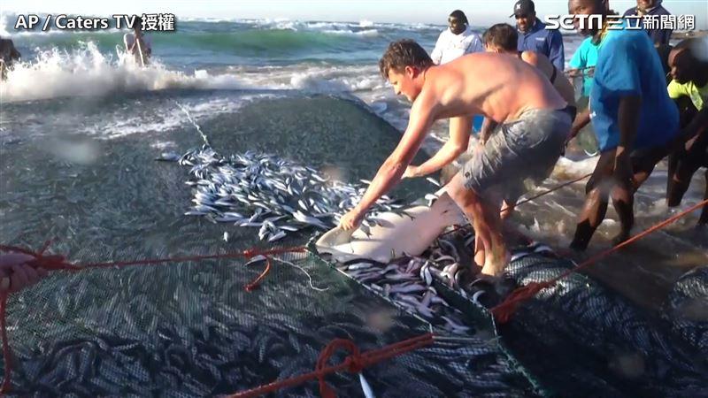 困魚網超無力 熱心男幫鯊魚重返大海