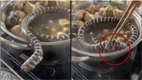 整隻活蛇丟下鍋!牠痛苦扭動想逃命…遭「筷子壓頭」被煮熟(圖/翻攝自tiktok)