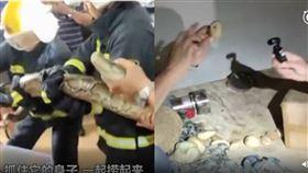 中國廣東,3公尺巨蟒躺床!狂生20顆蛋。(圖/翻攝自看看新聞)