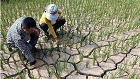 豬瘟、洪災不斷…他問中國啥時會飢荒?網揭真實數據解答了 (圖/翻攝自微博)