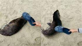 陸客「拖鞋」揍醒睡覺海獅 網氣炸 中國,陸客,水準,野生動物,虐待,海獅,南非,拖鞋 翻攝自微博