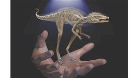 科學家發現一種「可以捧在手心」的恐龍(圖/翻攝自美國自然史博物館)