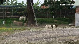 浪犬追車致死!卻有人阻礙推動保園區
