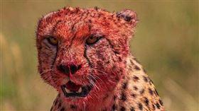 肯亞,羚羊,獵豹,馬賽馬拉國家公園。(圖/翻攝自tapansheth IG)