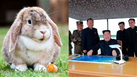 北韓下令士兵「養兔子」 真相驚呆網 北韓,兔子,糧食,金正恩,兔肉,蛋白質中毒 合成圖/翻攝自推特